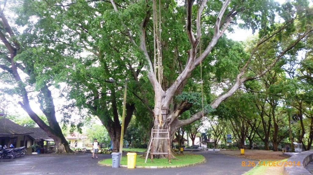 Pohon-pohon Rindang Pintu Masuk Pemandian Air Panas Way Belerang Kalianda