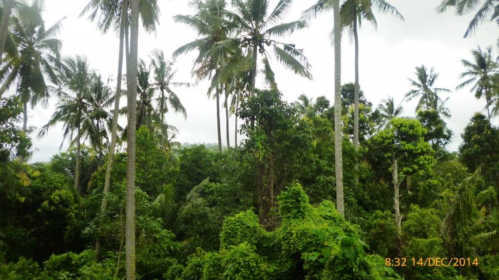 Hutan Belantara Pemandian Air Panas Way Belerang Kalianda